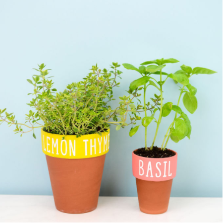 Vinyl Decal Herb Pots each one with a painted rim and the name of the herb on it